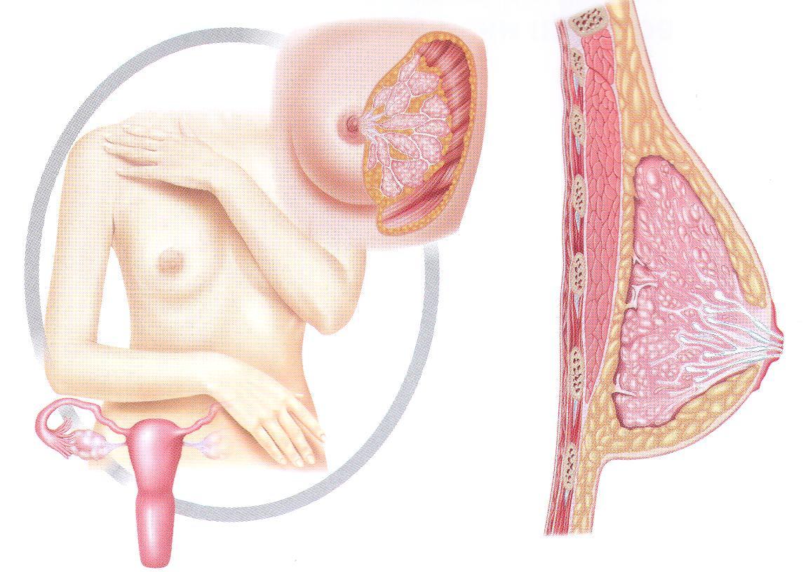 Маммология